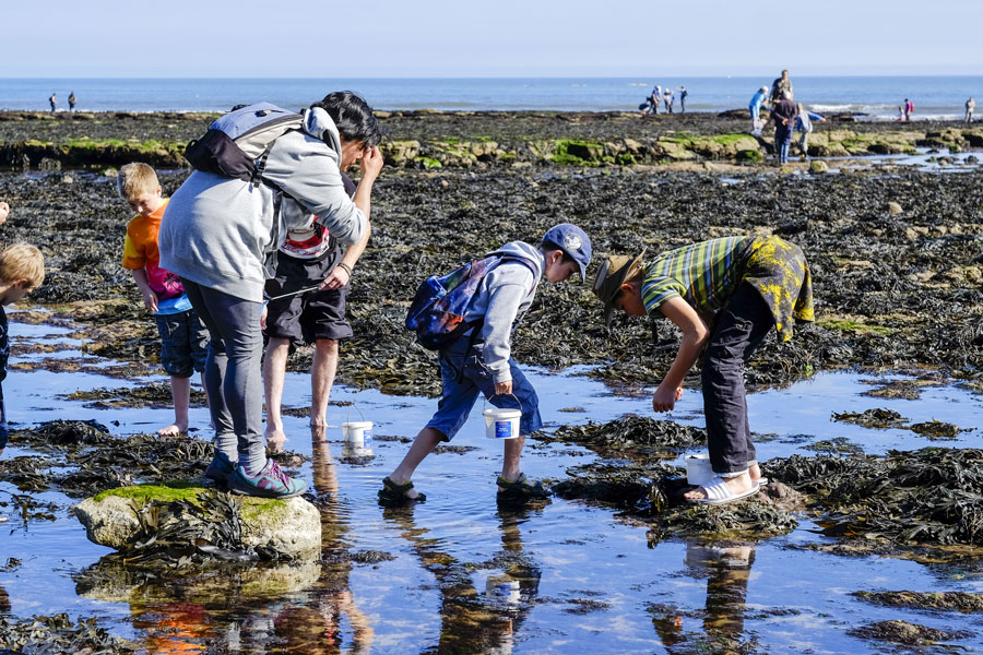 Rock-pooling at the Yorkshire Fossil Festival in Scarborough