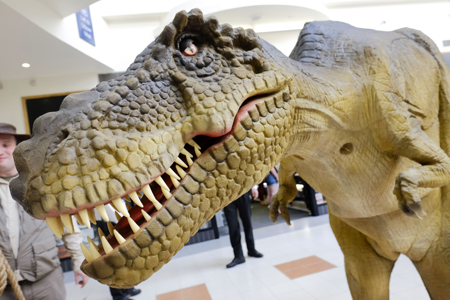 A dinosaur walks around Scarborough for the Yorkshire Fossil Festival